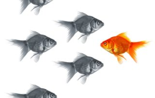 Goldfish swimming other direction showing smart sales management