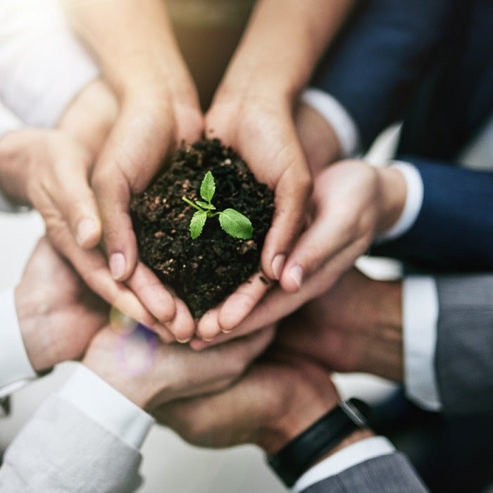 hands holding small plant nurturing leads for growth